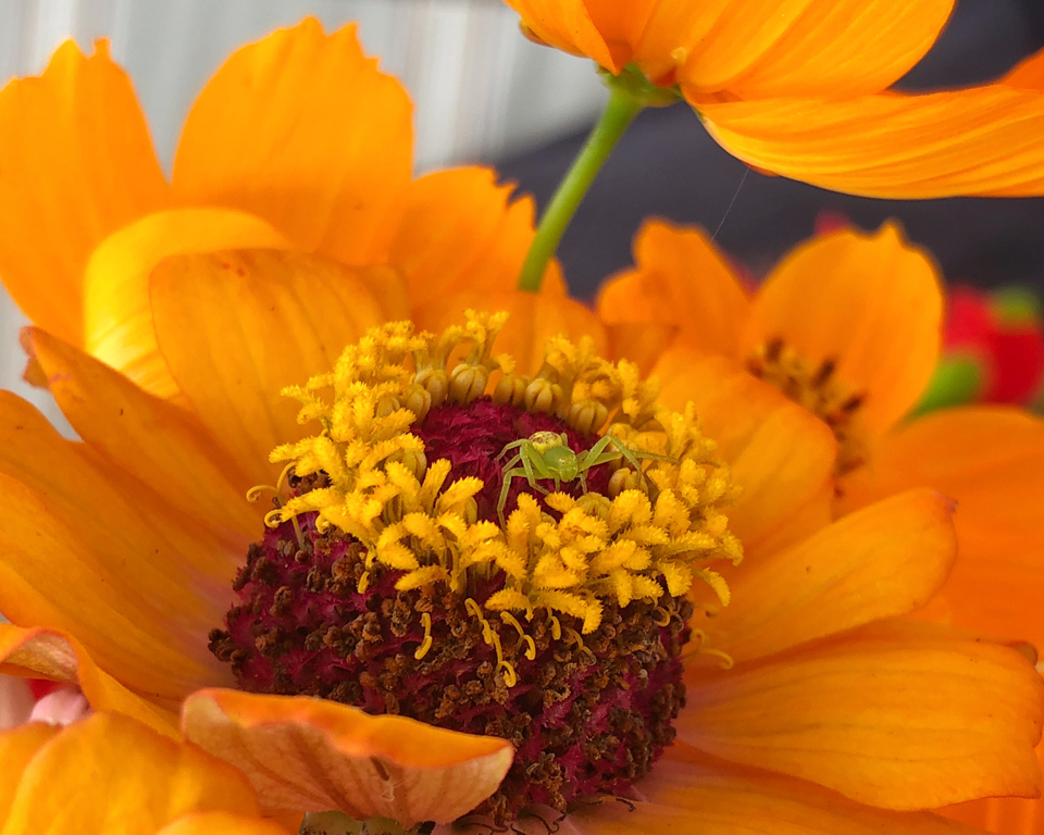 Hiding in the Flower