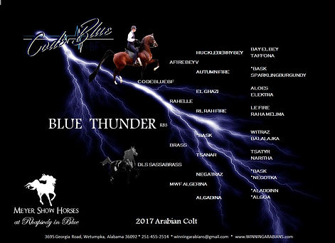 PEDIGREE - BLUE THUNDER RBS LIGHTNING DA
