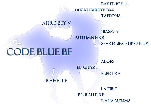 PEDIGREE - CODE BLUE BF - DECORATIVE.JPE
