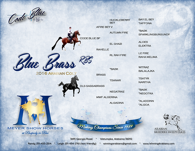 PEDIGREE - BLUE BRASS 11-6-19.png