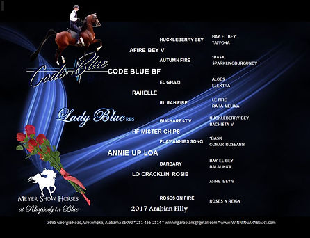 PEDIGREE - LADY BLUE RBS DARK.JPG