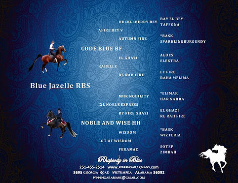 PEDIGREE - BLUE GIZELLE RBS.JPG