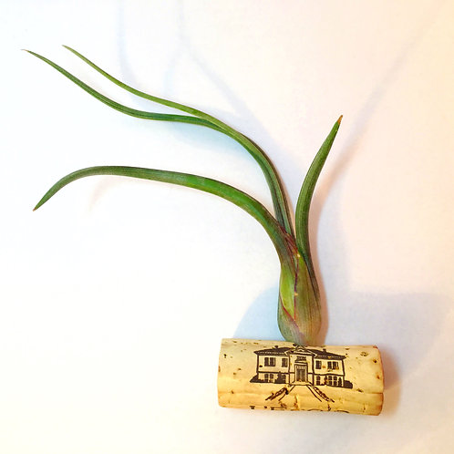 Magnetic Wine Cork w. Live Air Plant