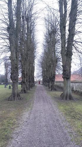 Kirkegården skal  hænge visuelt sammen og beplantningen indvirker i høj grad på indtrykket. Alleer kan give højde og dybde. Har træerne nået en vis alder, kan de virke som markante, skulpturelle elementer, der samler og angiver retning
