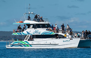 whale-watch-hervey-bay.jpg