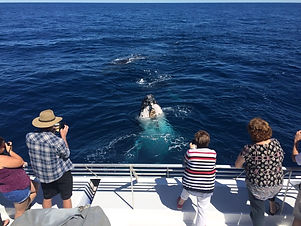 lady-musgrave-whale-watching-tour.jpg