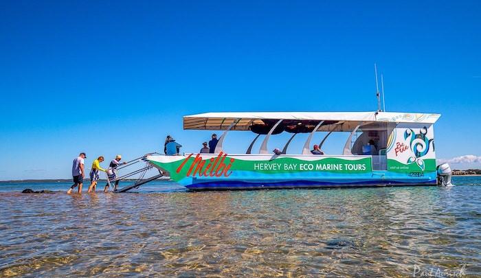 glass-bottom-boat-hervey-bay.jpg