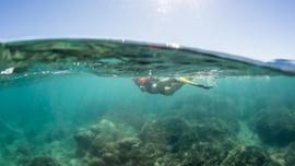 snorkeling-hervey-bay-2.jpeg