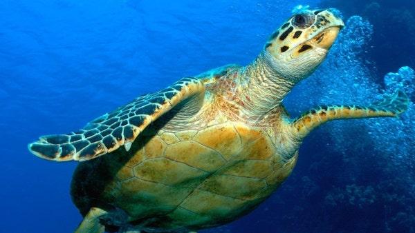 hervey-bay-turtle-tour-4