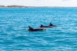 snorkeling-hervey-bay