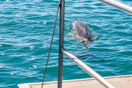 snorkeling-hervey-bay-4.jpg
