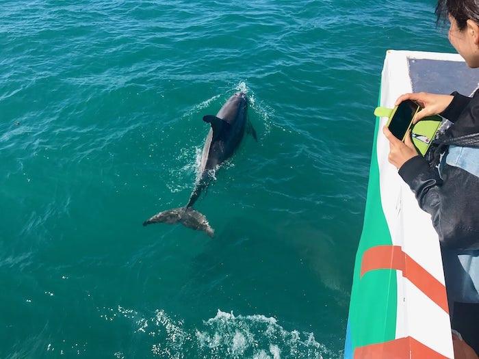 snorkeling-hervey-bay-tours