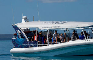 pacific-whale-foundation-hervey-bay.jpg