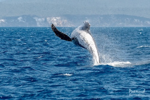 whale-watching-queensland