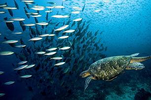 turtle-reef-snorkel-hervey-bay