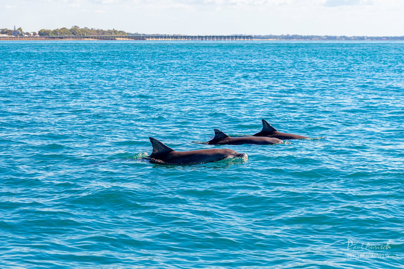 dolphin-hervey-bay-tour