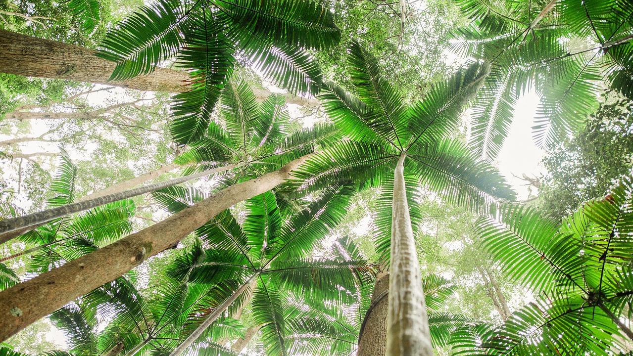 fraser-island-forest