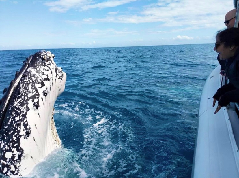 Things to do in Hervey Bay - whale watching