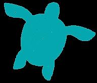 Turtles Hervey Bay