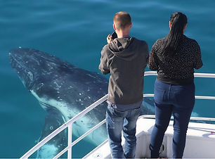 Things-to-do-Hervey-Bay-whales-5.jpg