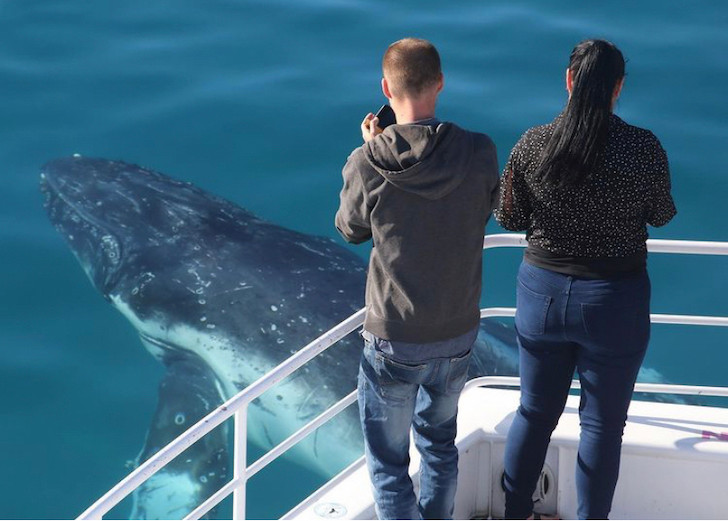 Things to do in Hervey Bay - whales
