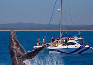 whale watching cruise hervey bay