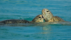 hervey-bay-turtle-tour-1.jpeg