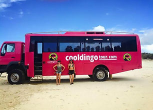 cool-dingo-tours-fraser-island.jpg