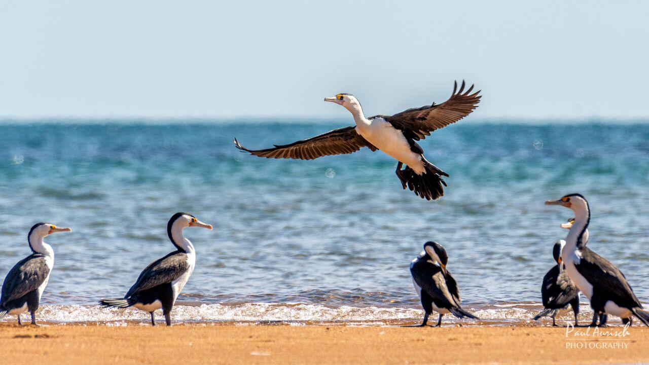 birds-hervey-bay-queensland