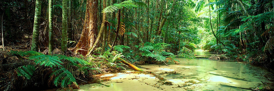 fraser-island-tours-from-hervey-bay