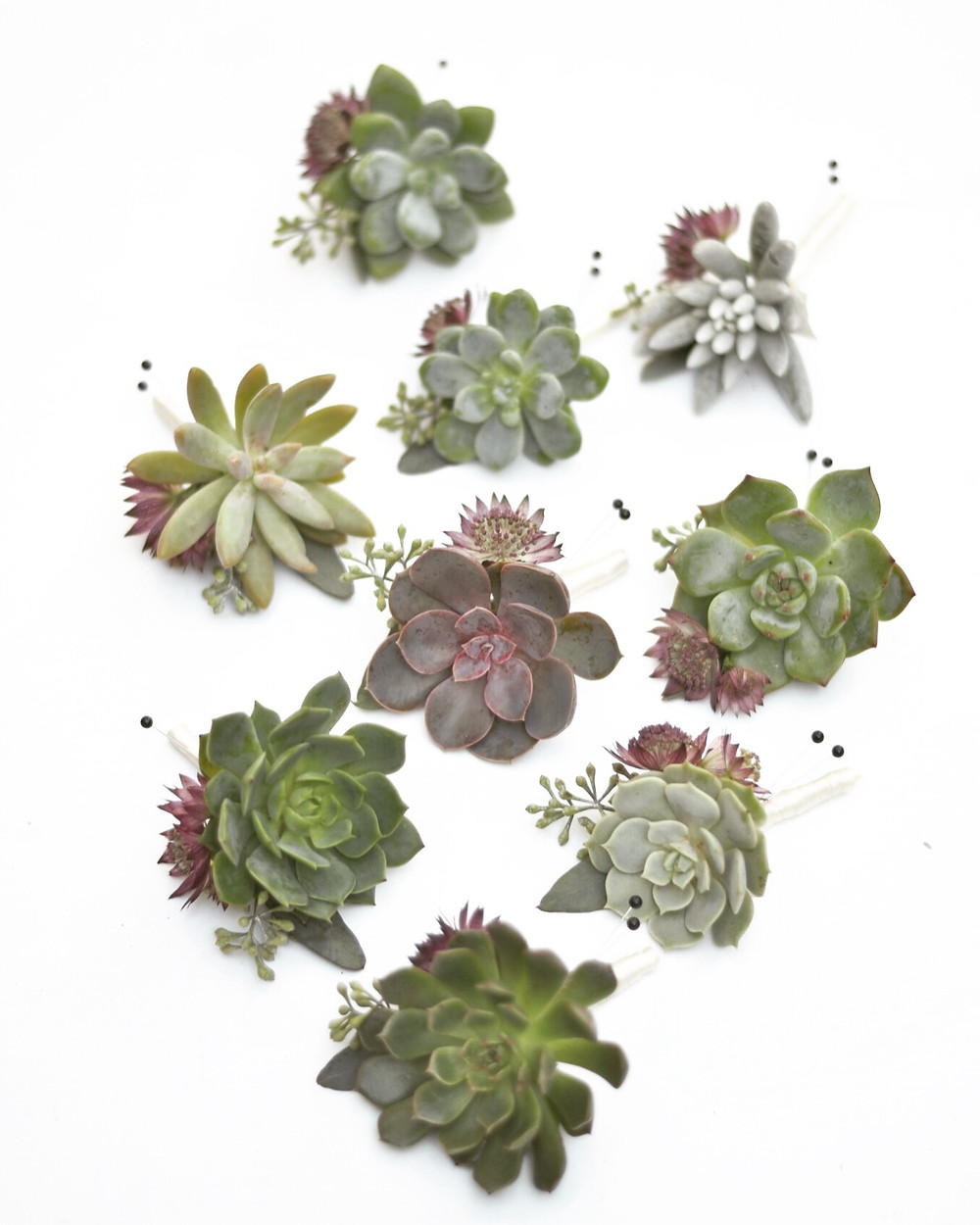 Succulent boutonnieres with Astrantias and seeded Eucalyptus