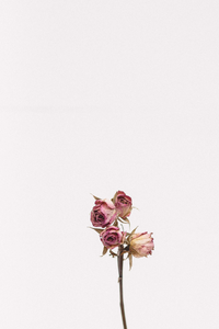 Dried roses representing exhaustion.