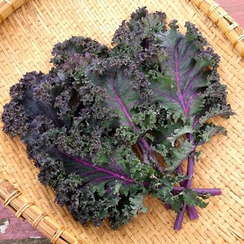 Scarlet kale bunch