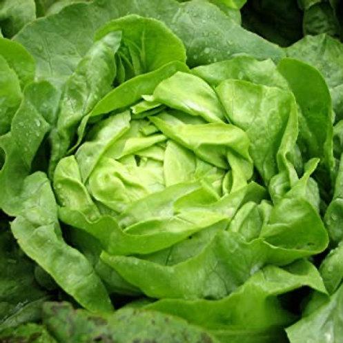 Butterhead lettuce (1 head)