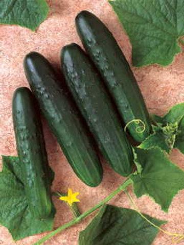 Slicing Cucumber (each)(greenhouse)