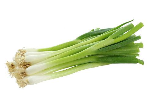 Spring Onion Bunch