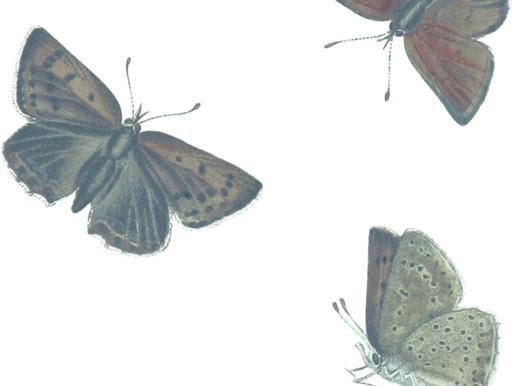 """Macy's : """"Butterfly"""""""