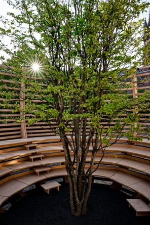 Arena für einen Baum