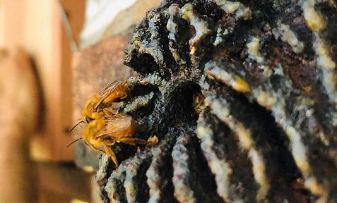 abelhas 3.jpeg