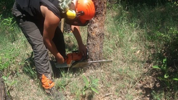 Erdőhasználati gyakorlat
