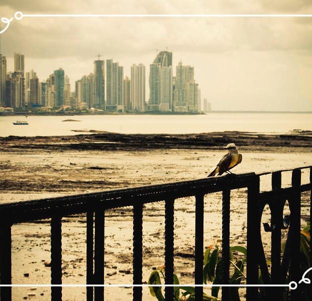 2008 - 2015 | Ciudad de Panamá, Panamá