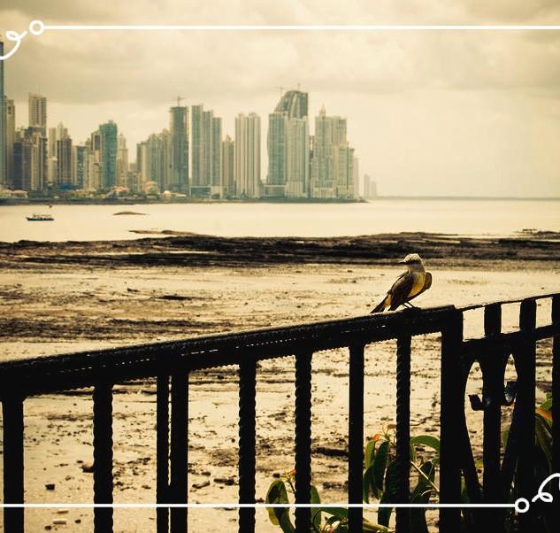 2008 - 2015 | Panama City, Panama
