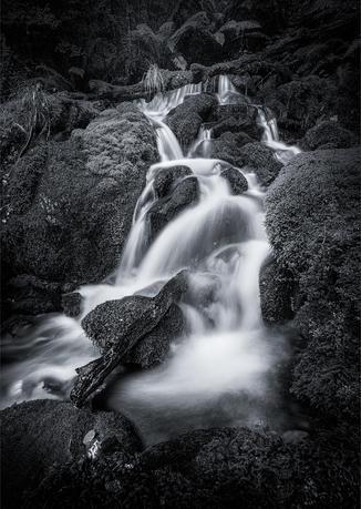 Forest Stream 1