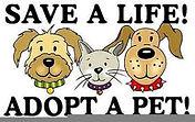 Pet rescue.jpg