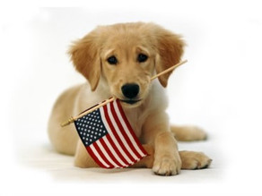 Pet Safety Tips For The 4th Of July!