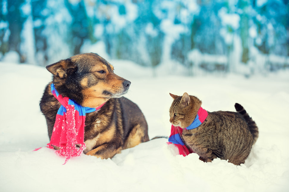 Dog and cat, wearing scarf, sitting toge