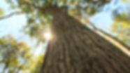 "(ALT=""Implementing Forest Management Plans"")"