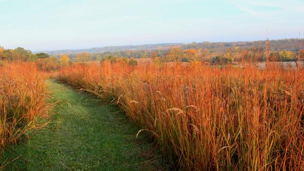 Establishing Prairie Grasses: Q&A