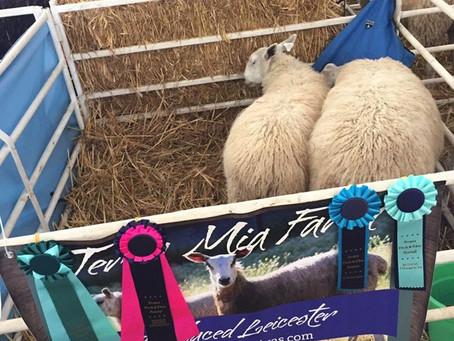 Oregon Flock and Fiber Festival (OFFF)