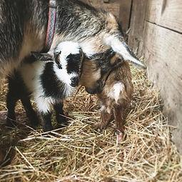 Jasmine loving on her new babies #farm36